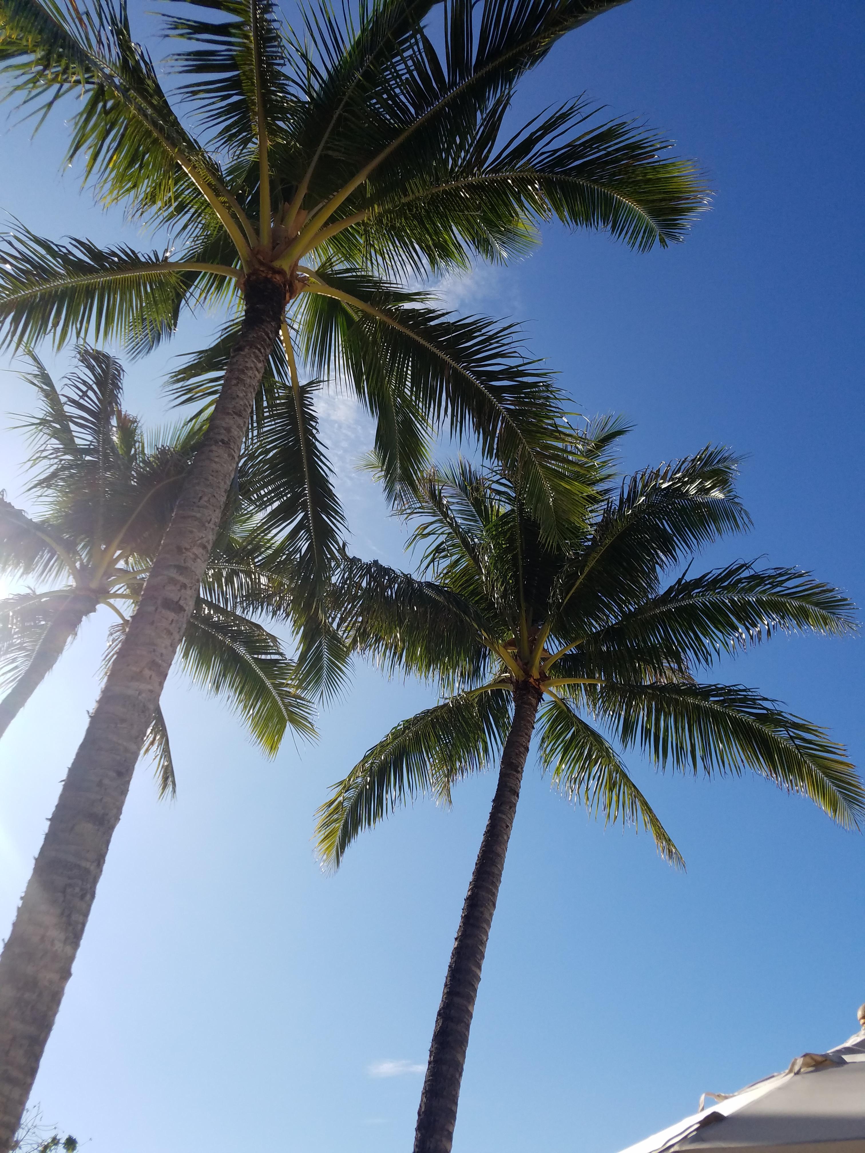 ハワイのお土産☆