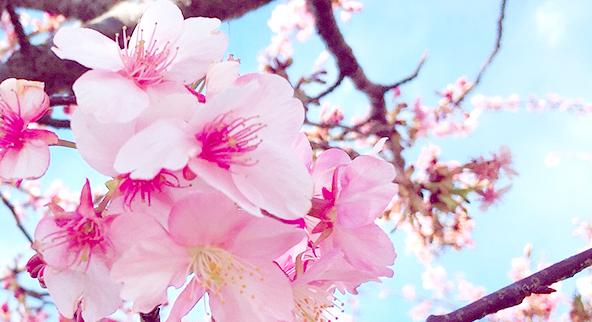 春といえば…桜ウェディング♡